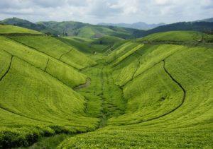 Visit RwandaTours